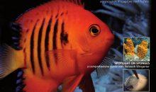 UltraMarine Magazine 60, riporta la seconda parte dell'articolo sui cambi d'acqua