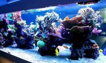 Della serie acquari spettacolari: come divisorio di due ambienti