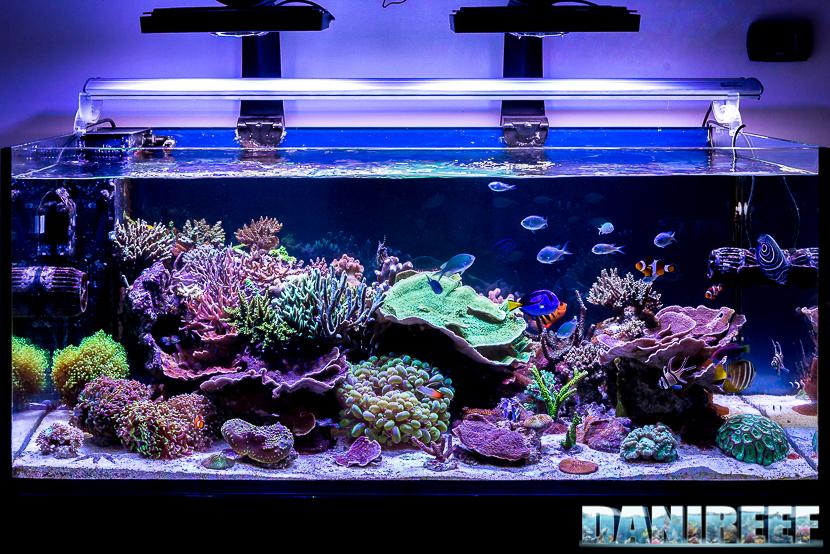L'acquario marino di lollo - sps, lps e tanti pesci - vista frontale