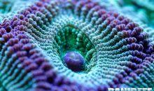 Come il movimento stimola la fotosintesi nel corallo… ma solo se…