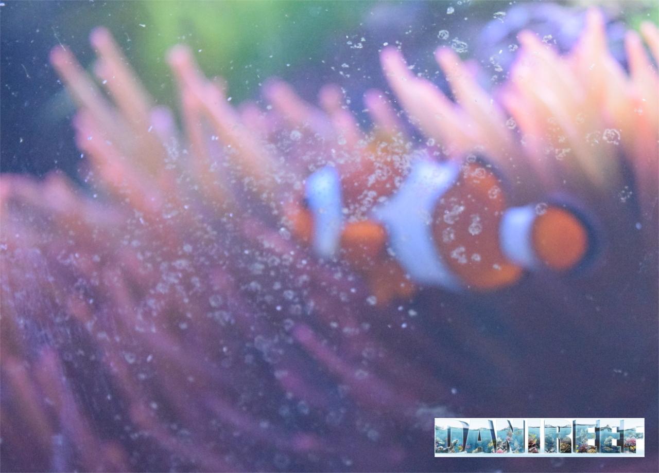 Appena non puliamo il vetro per qualche giorno le alghe fanno passare il contenuto dell'acquario in secondo piano...