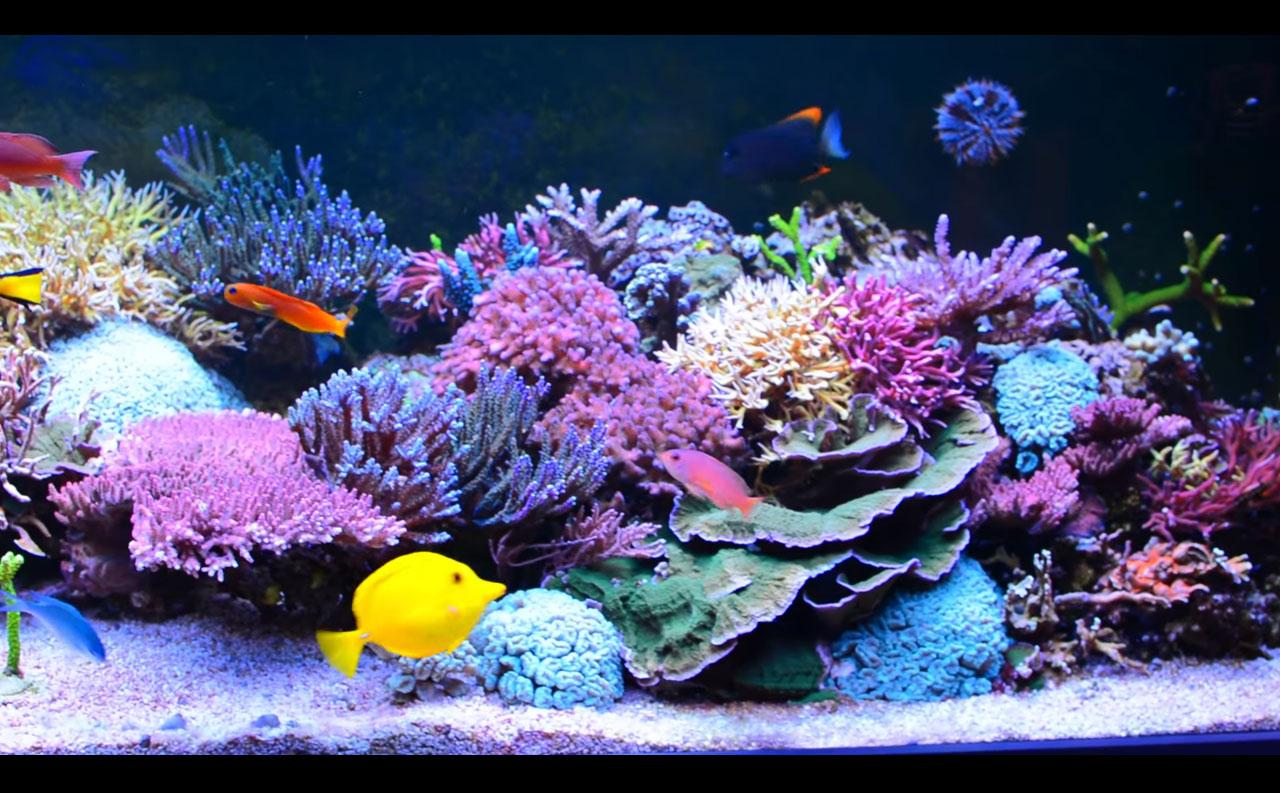 Uno spettacolare acquario polacco da 700 litri di for Fondo per acquario