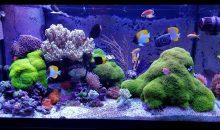 E chi l'ha detto che un acquario di coralli molli non sia interessante?