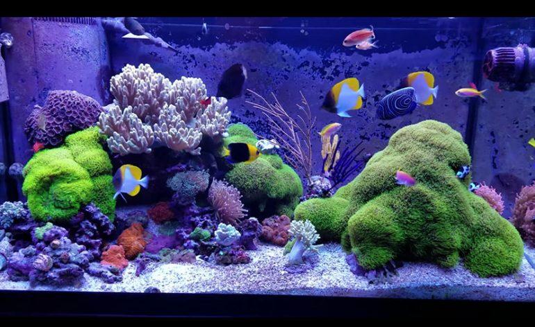 E chi l 39 ha detto che un acquario di coralli molli non sia for Pompa per pulizia acquario