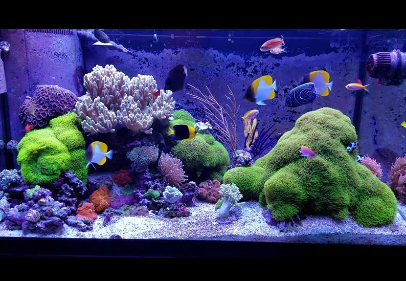 uno splendido acquario di coralli molli