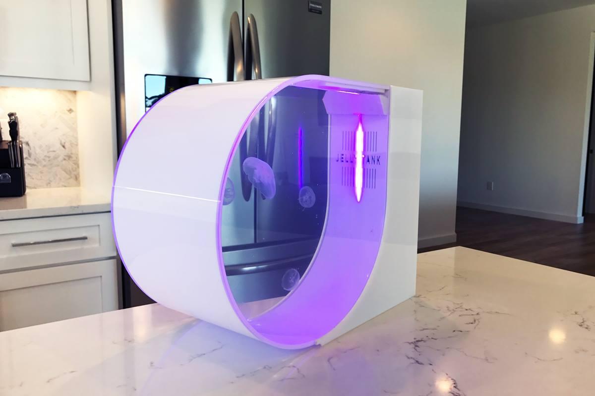jellytank - acquario economico per meduse