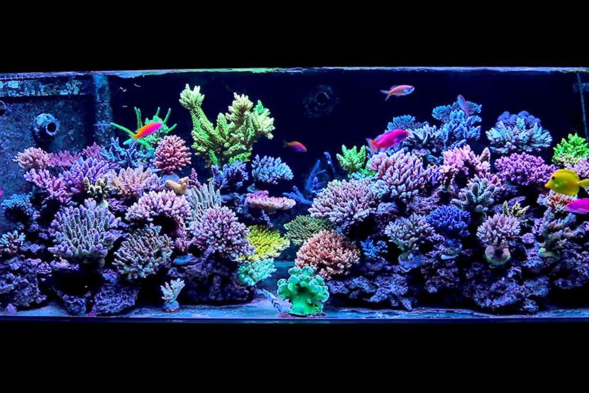 acquari dal mondo in video la spettacolare vasca di