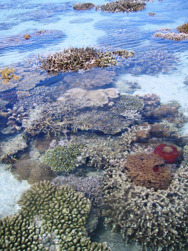 Coralli esposti alla bassa marea