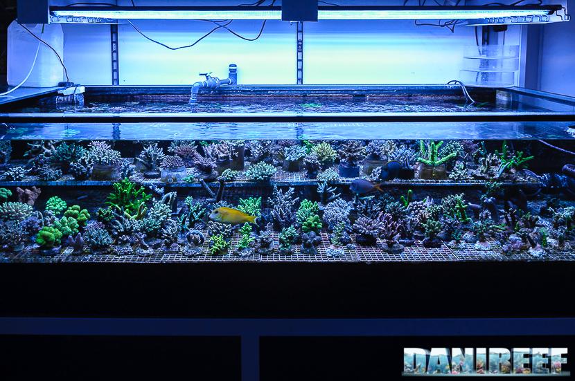 Una delle splendide vasche espositive di Hobby Acquari riservata ad SPS