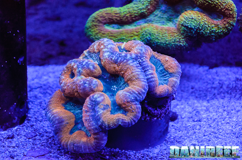 Conch slim 7 corallinea ed hobby acquari insieme per la for Acquari particolari
