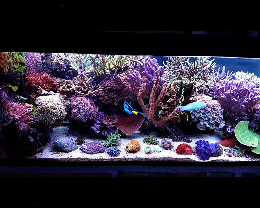 L 39 acquario di glenn fong 12 anni senza cambi d 39 acqua e con for Pesci acquario
