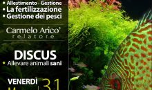 Evento Discus – L'Acquario Facile – allevare animali sani – questa sera presso Acquariomania a Pinerolo