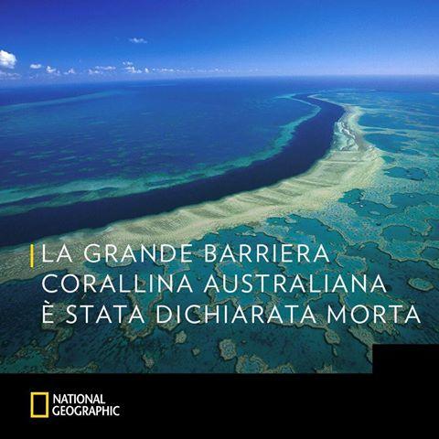 la morte della grande barriera corallina australiana