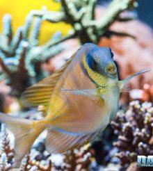 Pesci e Colori – una dieta varia per il loro benessere