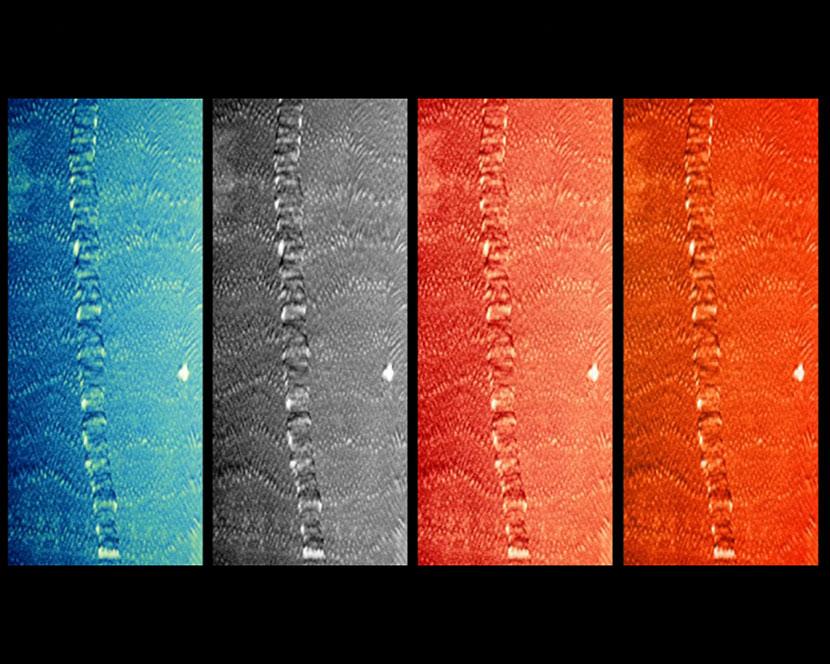 Corallo visti ai raggi X, sotto un sincrotone