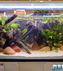 Parliamo dell'utilizzo della sabbia nell'acquario di acqua dolce
