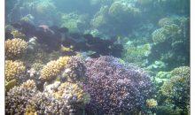 Editoriale: l'acquariofilia marina sta cambiando sotto i nostri piedi, quale futuro?