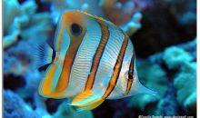 La pesca dei pesci con il cianuro potrebbe essere evitata, vediamo gli ultimi sviluppi della ricerca