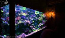 David Saxby: 14.000 litri per un acquario realmente emozionante