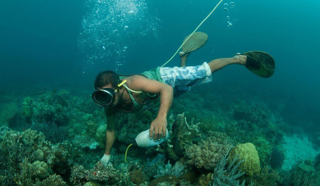 Pesca dei pesci con il cianuro: pescatore in azione
