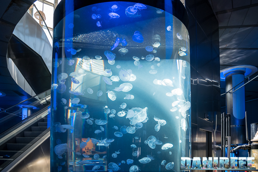 Oceanografic di Valencia: vasca con le meduse all'ingresso