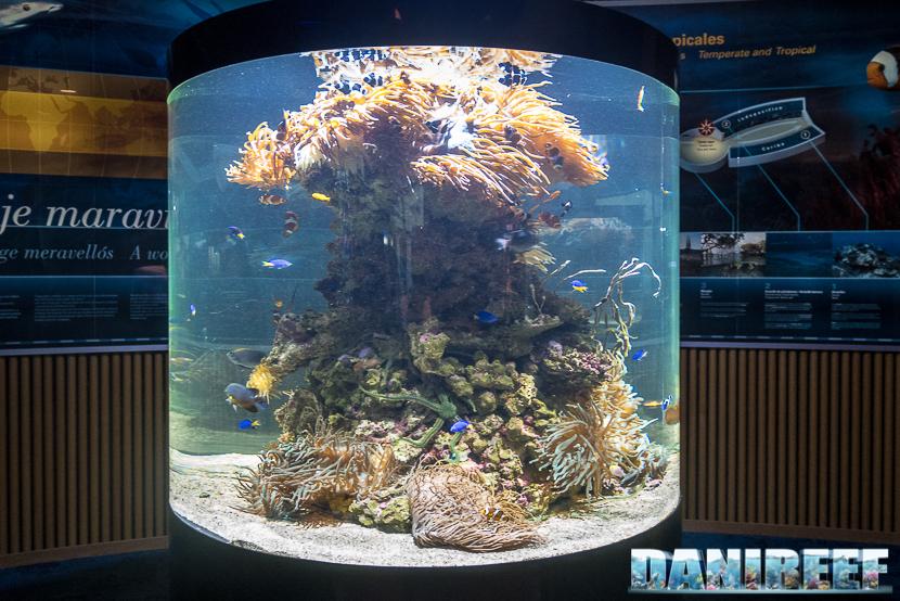 Oceanografic di Valencia: acquario marino con anemoni e pesci pagliaccio