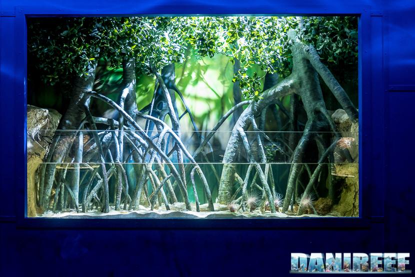 Oceanografic di Valencia: mangrovieto e cerianthus
