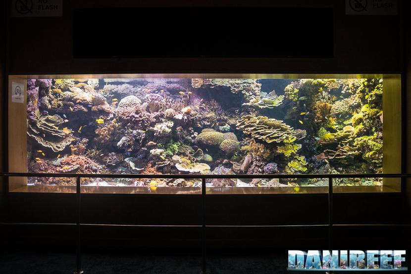 Oceanografic di Valencia: la barriera corallina