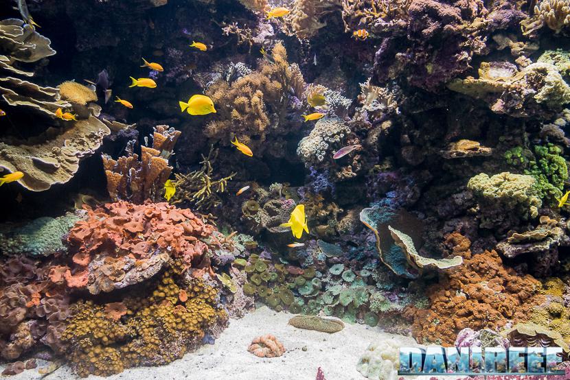 Oceanografic di Valencia: La vasca della barriera corallina, particolare