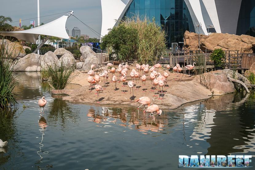 Oceanografic di Valencia: fenicotteri rosa