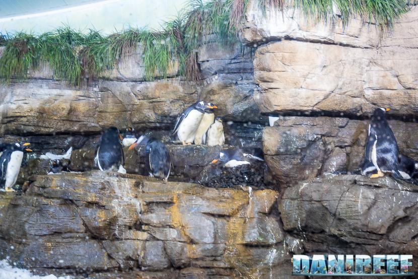 Oceanografic di Valencia: pinguini