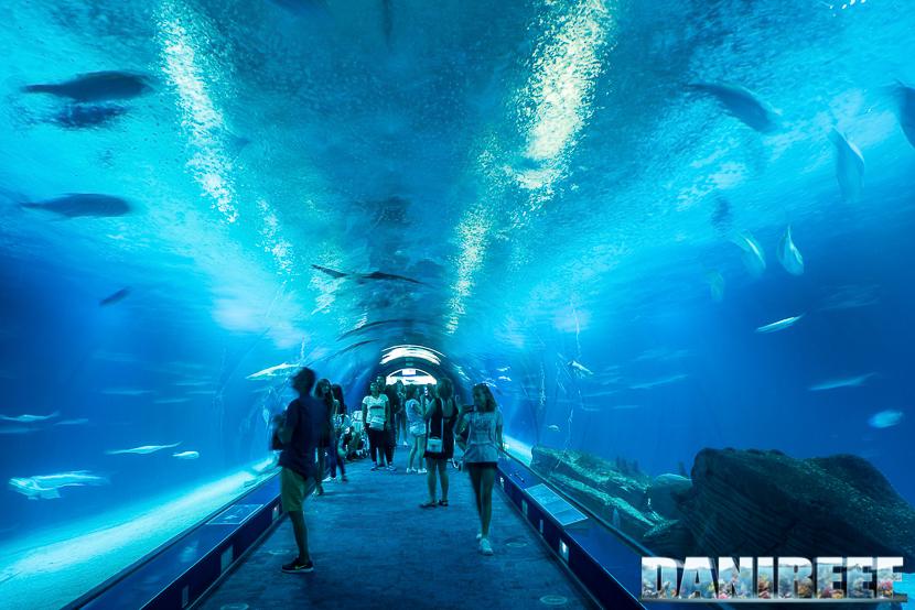 Oceanografic di Valencia: l'enorme tunnel degli squali