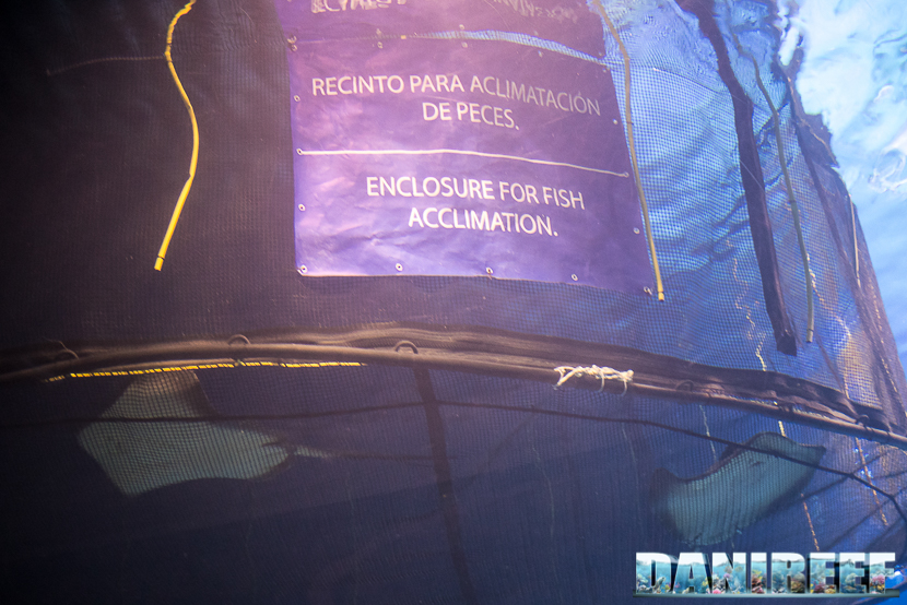Oceanografic di Valencia: acclimatazione delle razze