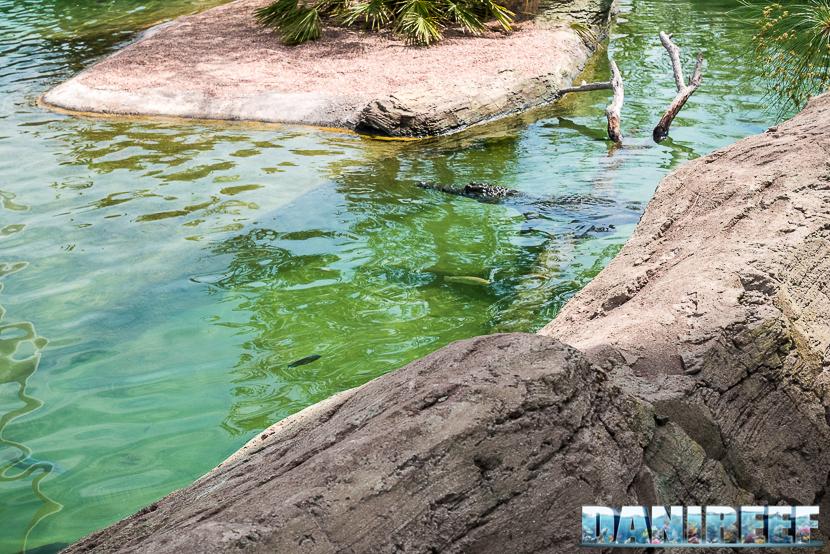Oceanografic di Valencia: coccodrillo