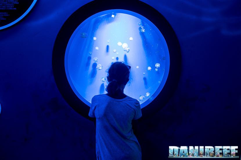 Oceanografic di Valencia: acquari con meduse