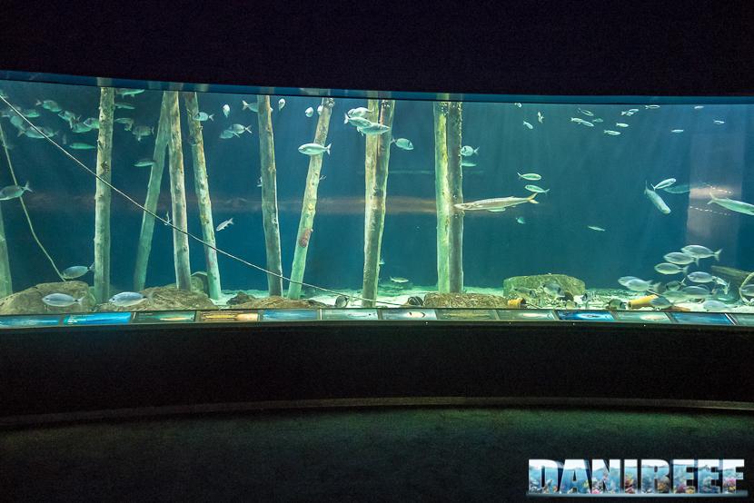 Oceanografic di Valencia: acquario mediterraneo