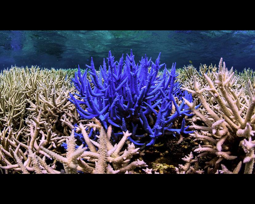 La Recensione di Chasing Coral da parte del portale DaniReef - colori zeovit nella barriera corallina