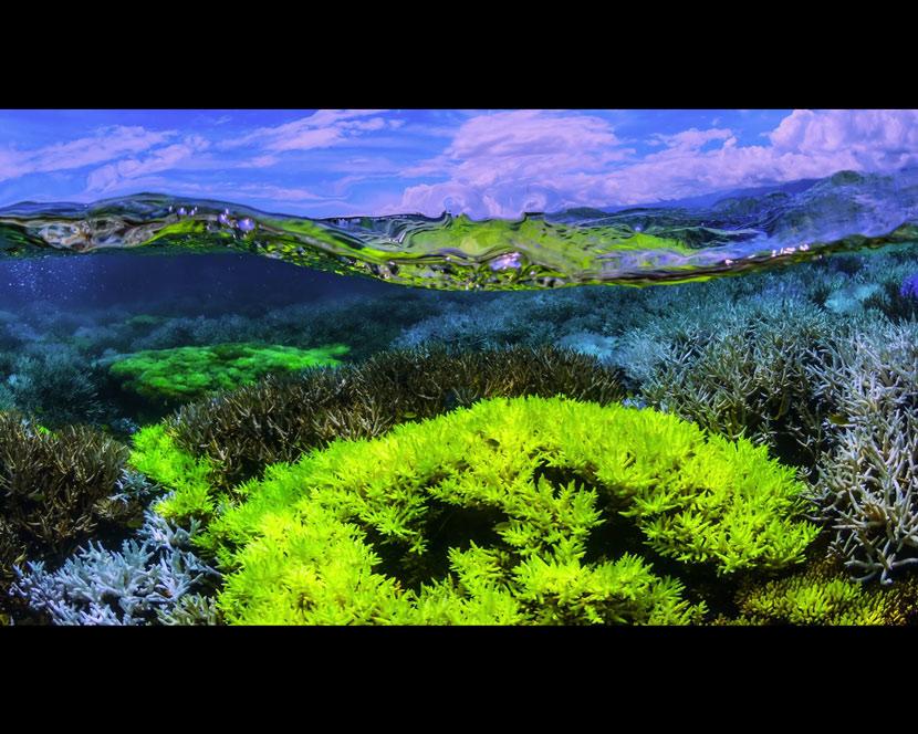 La Recensione di Chasing Coral da parte del portale DaniReef - colori incredibili nella barriera corallina prima dello sbiancamento dei coralli
