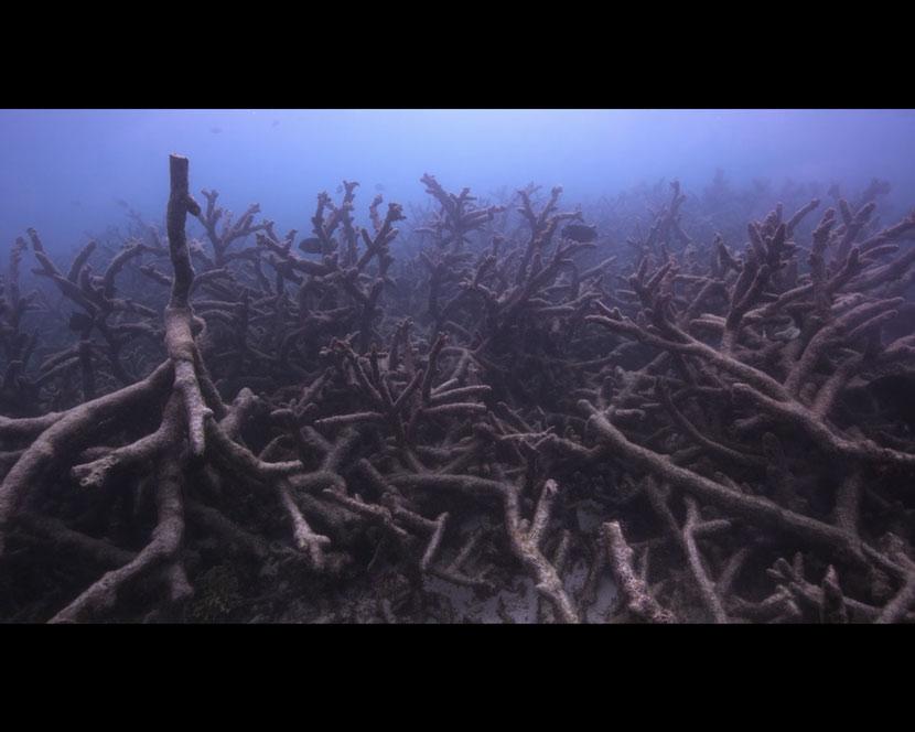 La Recensione di Chasing Coral da parte del portale DaniReef - barriera sbiancata