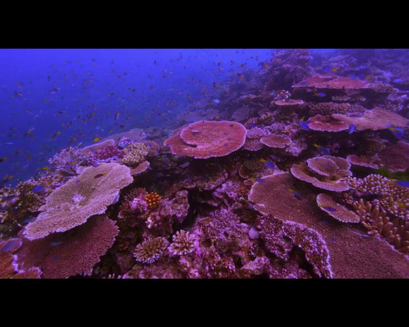 La Recensione di Chasing Coral da parte del portale DaniReef - grande barriera corallina