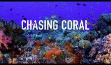 Chasing Coral – la nostra recensione sul documentario con foto