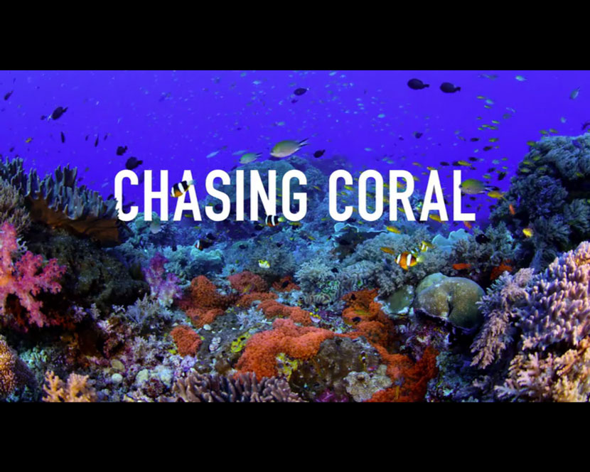 La Recensione di Chasing Coral da parte del portale DaniReef