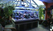Il sogno di tutti, un acquario illuminato (anche) dal sole: l'acquario di Paul Bruns