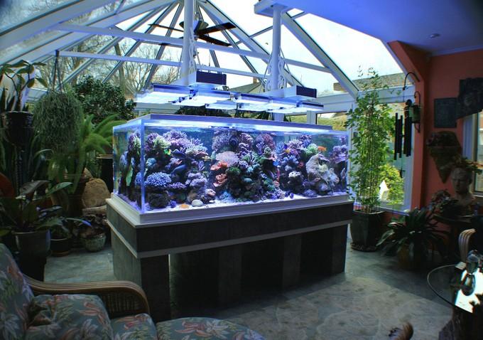 L'acquario di Paul Bruns illuminato dal sole, anche se solo parzialmente