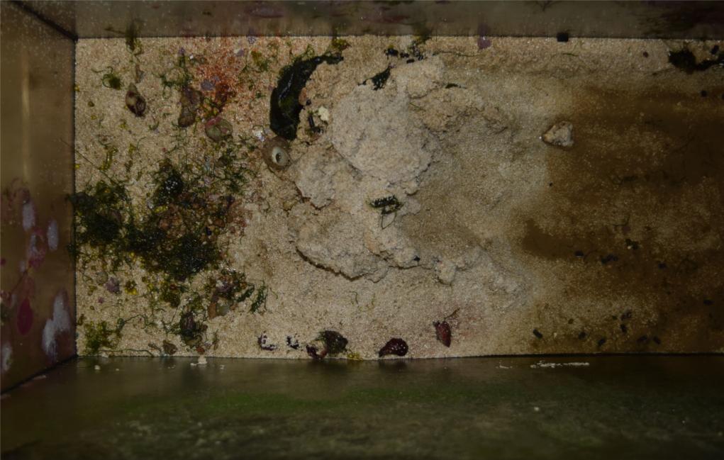 Il fondo dell'acquario svuotato.