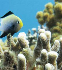 Le barriere coralline sono intrecciate intricatamente in modi che dobbiamo ancora apprezzare appieno