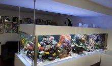 Un acquario Reef da oltre tre metri sospeso da terra… una gioia per gli occhi