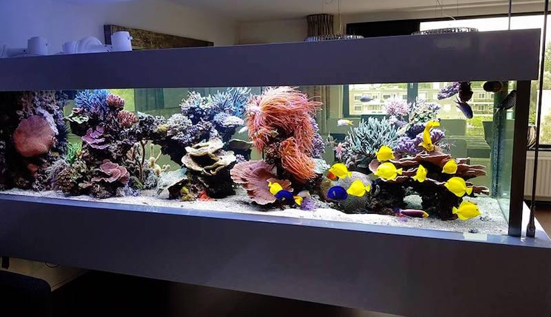 Ralph's Reef - acquario sospeso