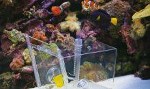 Come catturare un pesce in acquario facilmente e velocemente