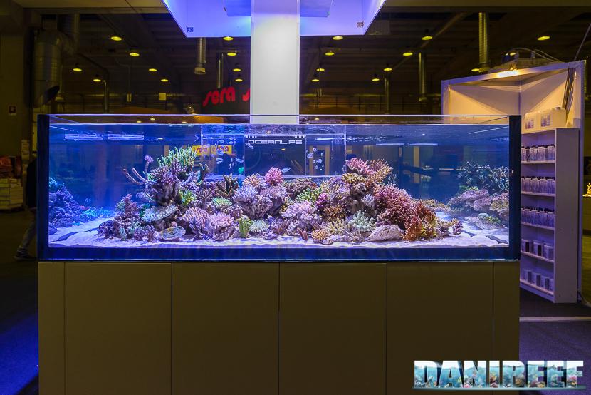 PetsFestival 2017: i coralli nello stand OceanLife - Hobby Acquari